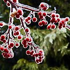 Icy Crab Apples by Kenneth Keifer