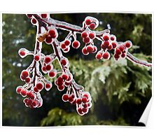 Icy Crab Apples Poster