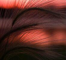 Grass Sunset by jkartlife