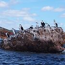 Cormorants. This rock is taken.  by Esther's Art and Photography