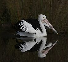 Perfection in My Reflection Pelican  by Kym Bradley