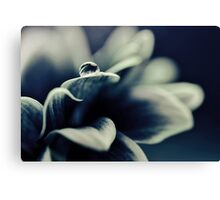 Daisy Blue - for Ingrid on her birthday! Canvas Print