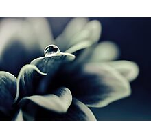 Daisy Blue - for Ingrid on her birthday! Photographic Print