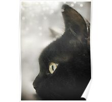 The Black Cat (Sammie) Poster