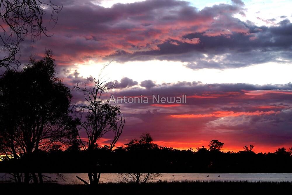 Sunrise at Penstock Lagoon by Antonia Newall