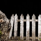 Picket fence by Jan Pudney