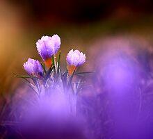 Wildflowers by Balazs Kovacs