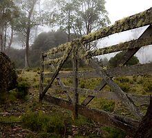 Old Cattle Run by Steve Bass