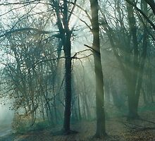 Mist In the Woods 5 by Robbie Patterson