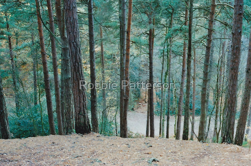 Open Woods 1 by Robbie Patterson
