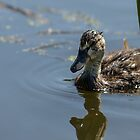 The Lonely Duckling by Randy Hill