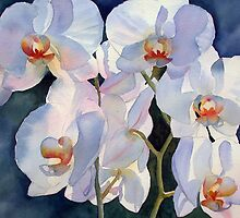 Backlit orchid by Ann Mortimer