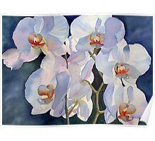 Backlit orchid Poster