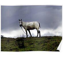 El Valle Horse Poster