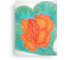 Lovely Begonia Canvas Print