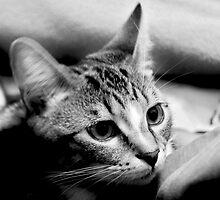 Pretty Kitty by Ladymoose