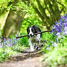 Molly and her stick by John Keates