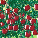 Apples by Barbara  Strand