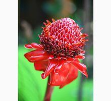 Red Ginger Flower Classic T-Shirt