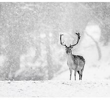 A Stag In The Snow Photographic Print