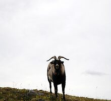 Goat watching by 5unm4g