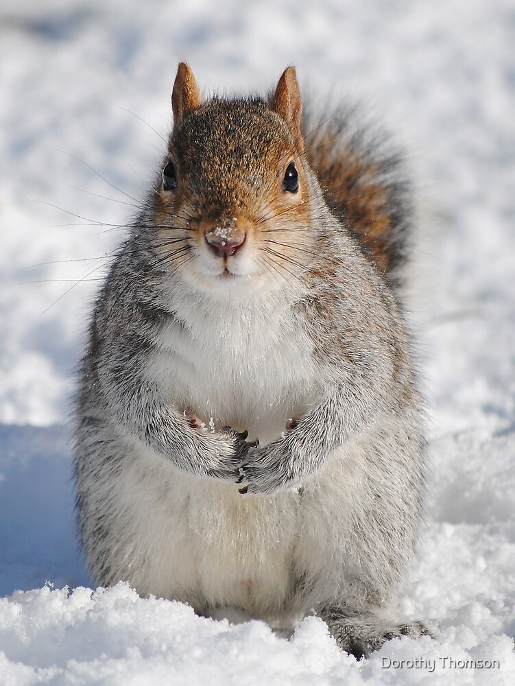 Squirrel In Snow by Dorothy Thomson