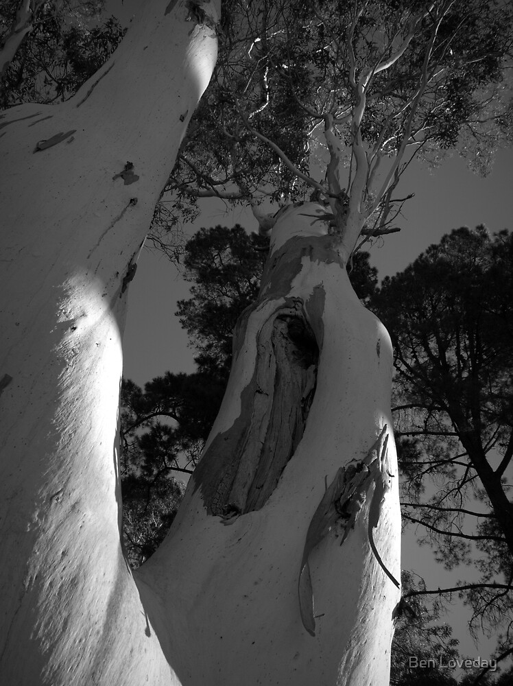 Scary Tree- Norton Summit Road by Ben Loveday