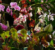 Orchid crescendo by MarianBendeth