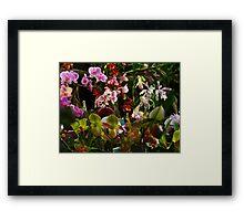Orchid crescendo Framed Print