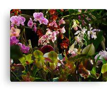 Orchid crescendo Canvas Print