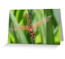 Closeup of Red Skimmer or Firecracker Dragonfly Greeting Card