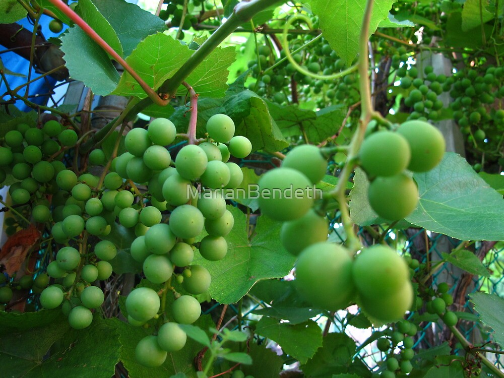 Green grapes by MarianBendeth