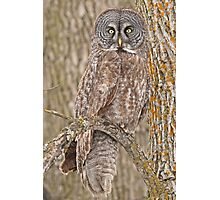 Camouflage-an owl's best friend Photographic Print