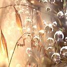 A place of lightness by David Rozario