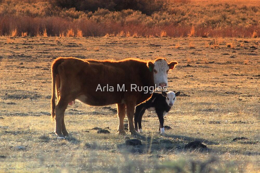 Bovine Baby by Arla M. Ruggles