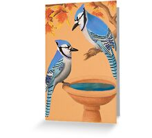 Blue Jays In Fall Greeting Card
