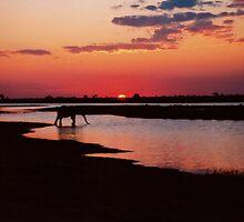 Sundowners in Chobe ! by Dean Cunningham