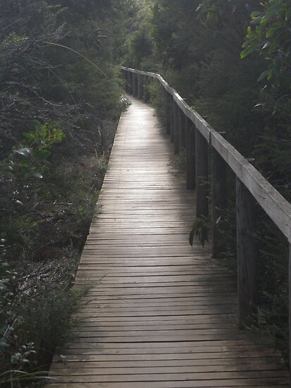 Coastal Boardwalk - Victoria, Australia by Kay Cunningham