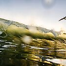 Seagull Surfers by Andrew Simoni