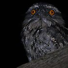 Night Owl by lib225