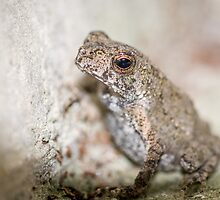 Up and Close to a Frog by robyn70