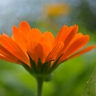 Radiant Orange by Tamara Al Bahri