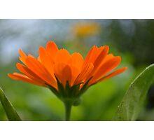 Radiant Orange Photographic Print