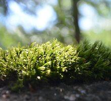 Moss by Tamara Al Bahri