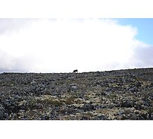 Lonely Reindeer Photographic Print