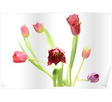 Tulips 2 Poster