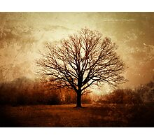 Winter Tree in Tooting Common Photographic Print