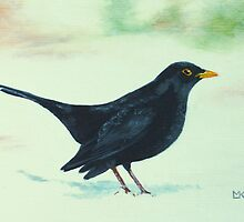Blackbird by Lynne  M Kirby BA(Hons)