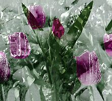 Tulips in the snow by Marlies Odehnal