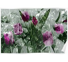 Tulips in the snow Poster